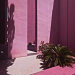 roze zidine