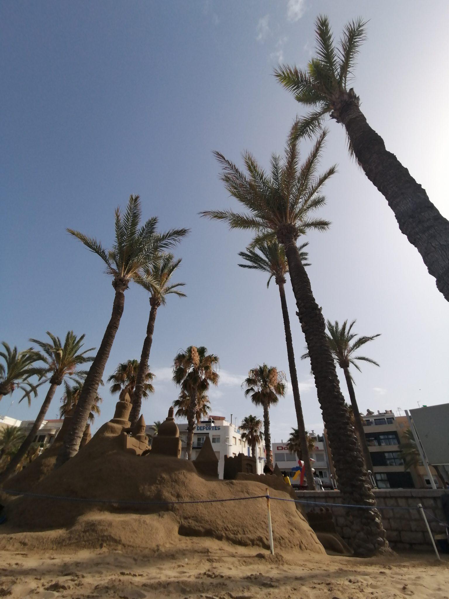 Palmice na plaži peniscola