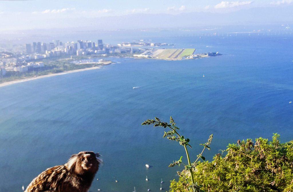travelina Pogled sa vrha - Glava šečera (sugarloaf)